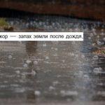 Петрикор — запах земли после дождя