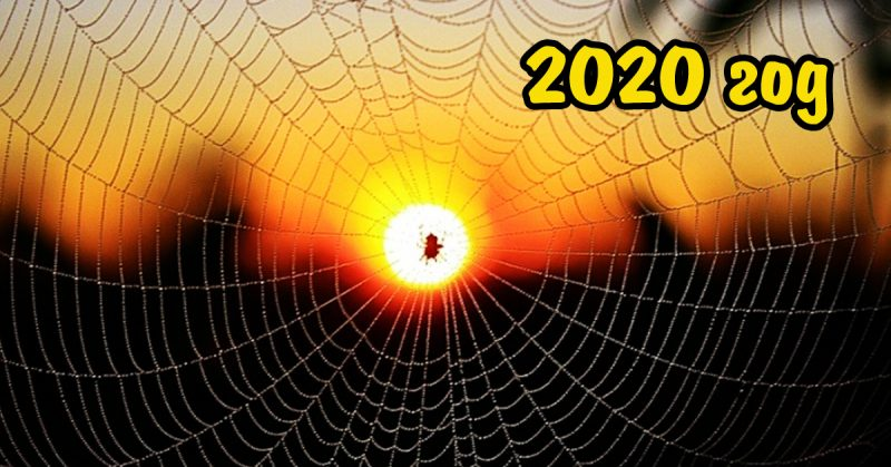 2020 год какого животного по славянскому календарю - fakty-o.ru
