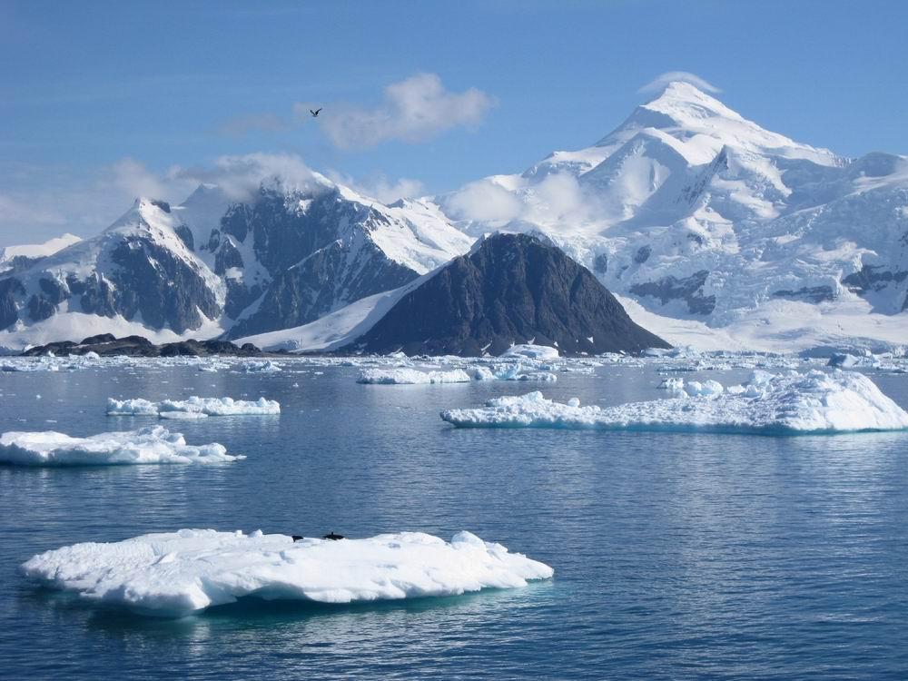 интересные факты об Антарктиде для детей