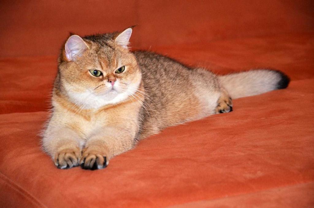Тикированный окрас кошек: разновидности, описание
