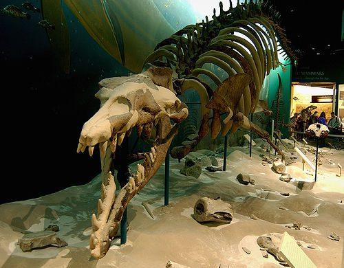 Базилозавр скелет