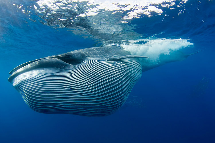 кит сейвал фото