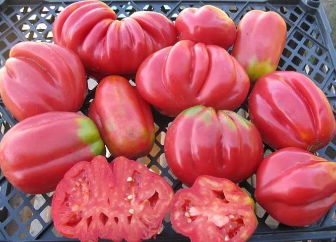 Томат Этуаль: описание сорта, урожайность, фото и отзывы